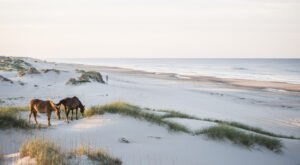 The Outer Banks: See Wild Horses Roam & Sink Your Toes Into The Sand In North Carolina