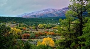 You'll Want To Visit Taos Goji Farm, A Dreamy Goji Berry Farm In New Mexico, This Spring