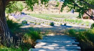 Get Lost In This Beautiful 36-Acre Lavender Farm In New Mexico