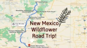 Take This Road Trip To The 6 Most Eye-Popping Wildflower Fields In New Mexico