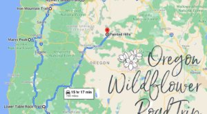 Take This Road Trip To The 7 Most Eye-Popping Wildflower Fields In Oregon