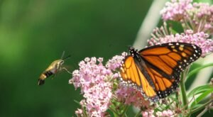 Venture Into Reinstein Woods, One Of The Best Places In Western New York To View Wildlife