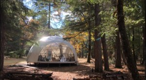 You Won't Forget Your Stay In This Divine Dome Located In Oregon's Fairytale Forest Sanctuary