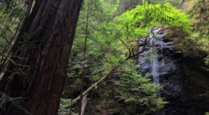 Jackson State Forest Is A Lucky Find For Nature Lovers In Northern California