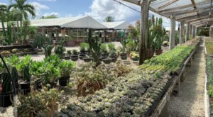 You'll Want To Visit Issac Farms, A Dreamy Succulent Farm In Florida This Spring