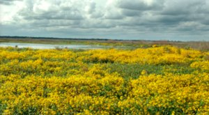 Paynes Prairie, Florida's First State Preserve, Will Be In Full Bloom Soon And It's An Extraordinary Sight To See