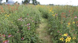 Wildflowers Are About To Burst Into Bloom At These 8 Ohio Parks