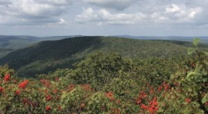 You'll Reach Gorgeous Mountain Views In Under 1 Mile When You Hike Bald Knob Trail In Virginia