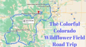 Take This Road Trip To The 6 Most Eye-Popping Wildflower Fields In Colorado