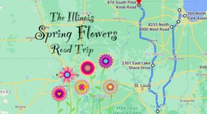 Take This Road Trip To The 7 Most Eye-Popping Spring Flower Fields In Illinois