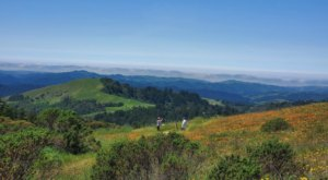 The Spring Wildflower Bloom At Russian Ridge Preserve In Northern California Is A Sight To Be Seen