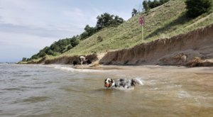 Kruse Park In Michigan Is A Secluded Beach Where Your Four-Legged Friends Are Welcome