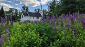 Take This Road Trip To The 3 Most Eye-Popping Lupine Fields In New Hampshire