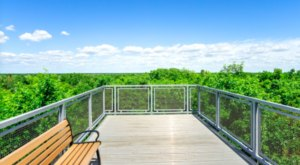 The Magnificent Overlook In Florida That's Worthy Of A Little Adventure