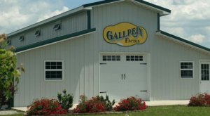 Feed Friendly Farm Animals And Pick Up A Few Plants At Gallrein Farms In Kentucky