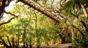 Experience The Florida Forest From A New Perspective On The Canopy Walk At Myakka River State Park