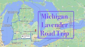 Take This Road Trip To The 7 Most Eye-Popping Lavender Fields In Michigan