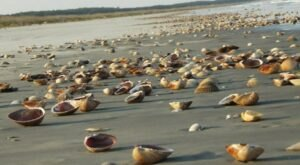 This Barrier Island Along Georgia's Coast Is The Best Place To Find Seashells