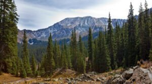 Climb The Tallest Mountain In New Mexico On This Gorgeous Yet Difficult Bull Of The Woods Trail