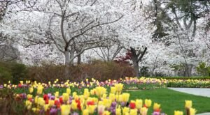 Spring Has Sprung At The Dallas Arboretum In Texas, Where Over 500,000 Flowers Are Blooming