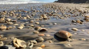 This Hidden Beach Along The Texas Coast Is The Best Place To Find Seashells