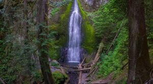 The Gorgeous 1.7-Mile Hike In Washington's Olympic National Park That Will Lead You Past Several Waterfalls