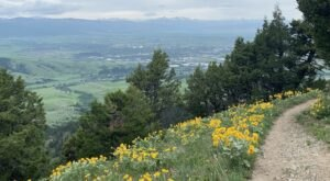 Sypes Canyon In Montana Will Have Acres Of Wildflowers In Bloom This Spring