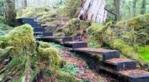 Follow The Enchanting Boardwalk Up To An Alaskan Waterfall On This Short And Sweet Hike