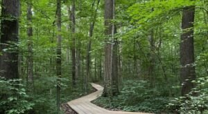 Take An Enchanted Forest Hike In Ohio Along The 2.5-Mile Kendrick Woods Loop