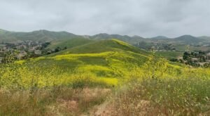 Hike Among Beautiful Wildflowers And Rolling Hills On This 4.4-Mile Loop In Southern California