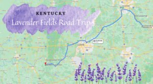 Take This Road Trip To The 4 Most Eye-Popping Lavender Fields In Kentucky