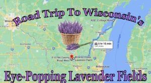 Take This Road Trip To The 6 Most Eye-Popping Lavender Fields In Wisconsin