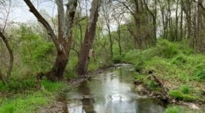 Only 100 Acres Of The Rare Marshland At This West Virginia Preserve Exist In The World