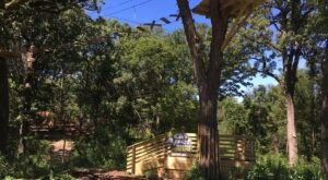 Fly Through The Trees At Go Ape Zipline And Adventure Park In Illinois