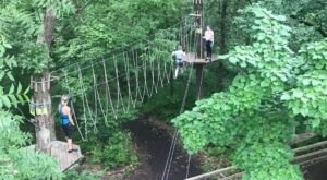 Soar Through The Treetops at Go Ape USA, A Zipline Adventure Course In West Tennessee
