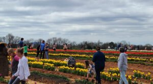 There's A New Tulip Farm In Alabama You'll Want To Visit This Spring