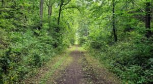 The Gorgeous 5-Mile Hike In The Irish Hills Near Detroit That Will Lead You Past A Lake And Forest