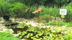 Wander Through A Delightful Landscape When You Visit Wilson Botanical Gardens In North Carolina