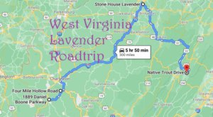 Take This Road Trip To The 4 Most Eye-Popping Lavender Fields In West Virginia