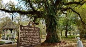 Louisiana's Most Famous Oak Tree Comes With A Bit Of Cajun Lore