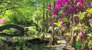 170 Acres Of Beautiful Blooms Await You At The Jungle Gardens In Louisiana
