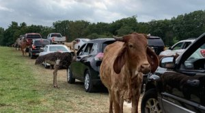 Buckle Up And Prepare For A Wild Ride At Backroads Safari In Wisconsin