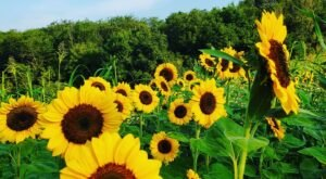 Get Lost In Beautiful Flower Fields At Terra Farms In Pennsylvania