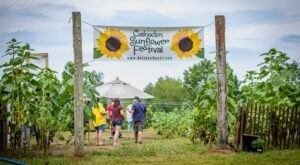 Visiting Ohio's Upcoming Sunflower Festival In Coshocton Is A Great Summer Activity