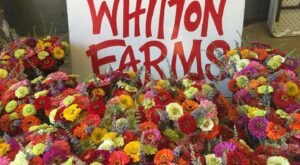 You'll Want To Visit Whitton Farms, A Dreamy Flower Farm In Arkansas This Spring