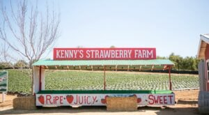 Pick Your Own Bucket of Strawberries At Kenny's Strawberry Farm For Only $15 In Southern California