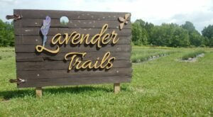 Get Lost In More Than A Mile Of Beautiful Lavender Plants At Lavender Trails In Ohio