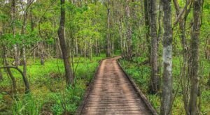 12 Lovely Loop Trails That Showcase Louisiana's Beautiful Scenery