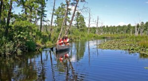 Kayak Through New Jersey's Pinelands For A Beautiful Adventure