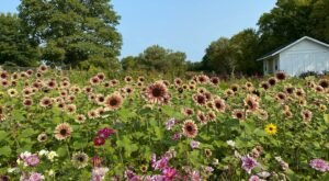 Get Lost In This Beautiful 17-Acre Flower Farm Near Detroit